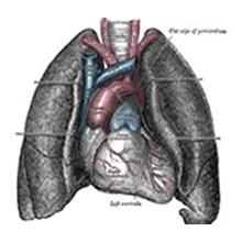 さくらひかりクリニック(大上啓樹院長)呼吸器内科